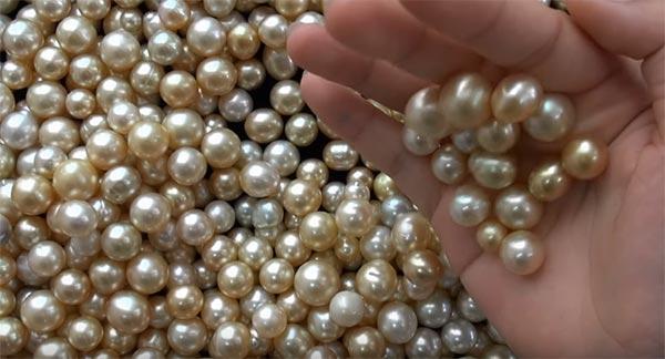 pearl-farming business ki jankari