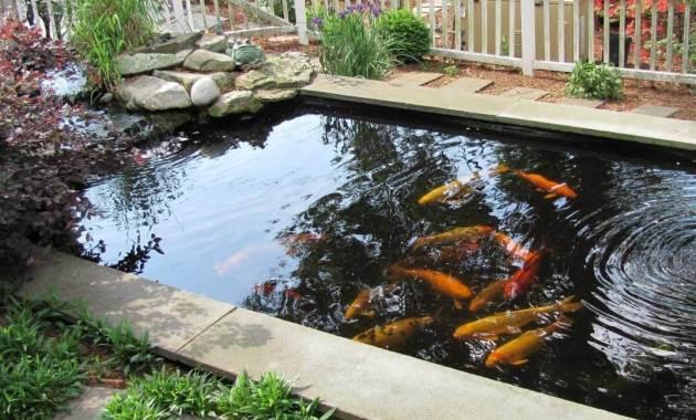 kolam koi untuk percantik rumah