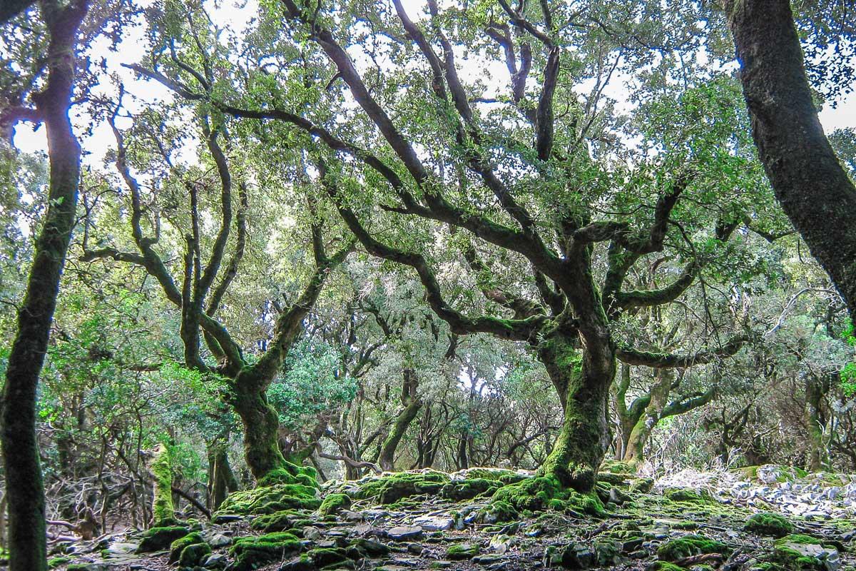 Ikaria's ecosystem