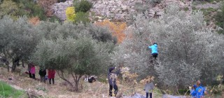 Greek lessons & olive harvest