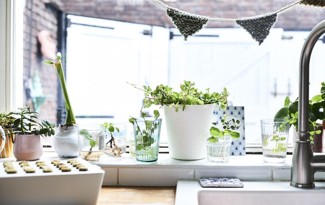 Come coltivare piante in casa con i bambini  IDEE  IKEA