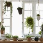 Fenstergarten Gestalten Fur Pflanzenfreunde Ikea Deutschland