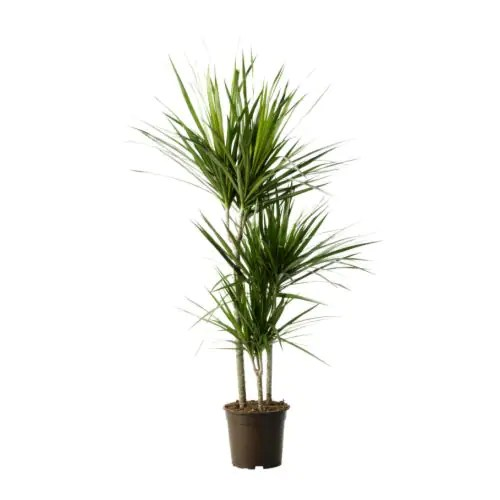 Artificial Plants Homebase