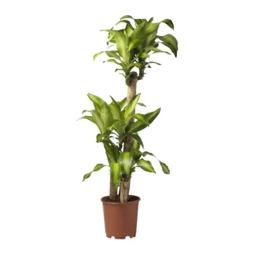 Ikea Indoor Plants
