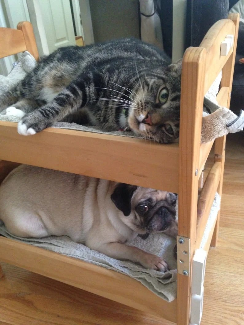 Can a dog and a cat be bunk bed mates Seems so  IKEA Hackers