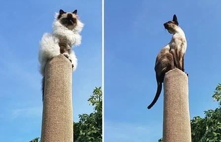 Cat climber pillar