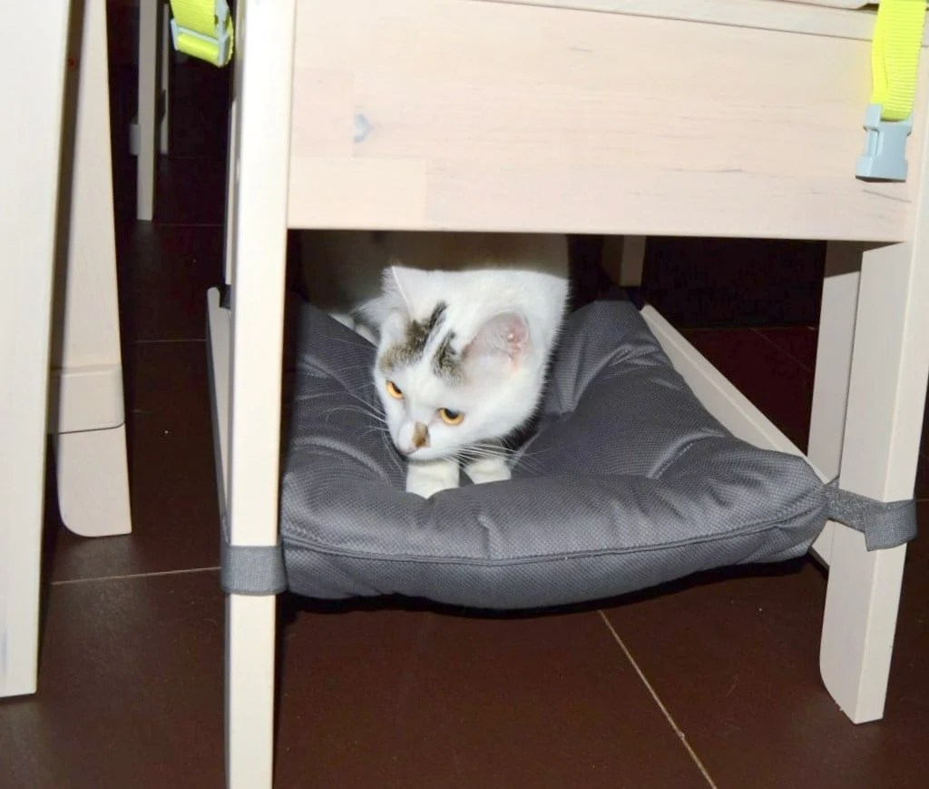 Cushy cat chair hammock