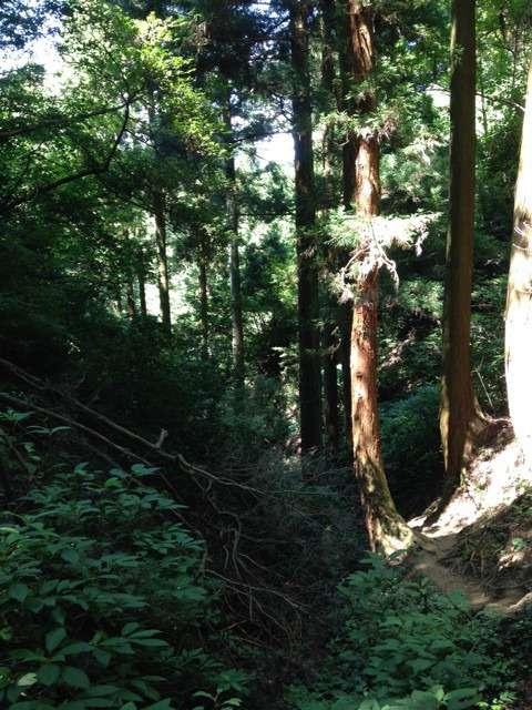 日立御岩神社 奥ノ院までの道