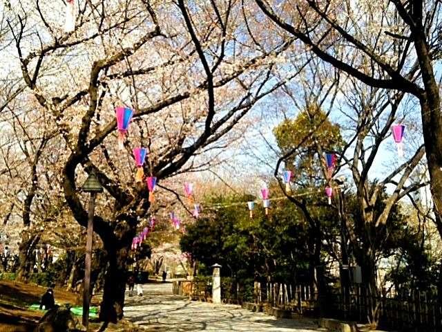 飛鳥山公園桜2018