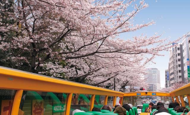 はとバス桜回遊2018