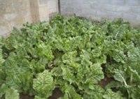Ikhala Trust Food Security