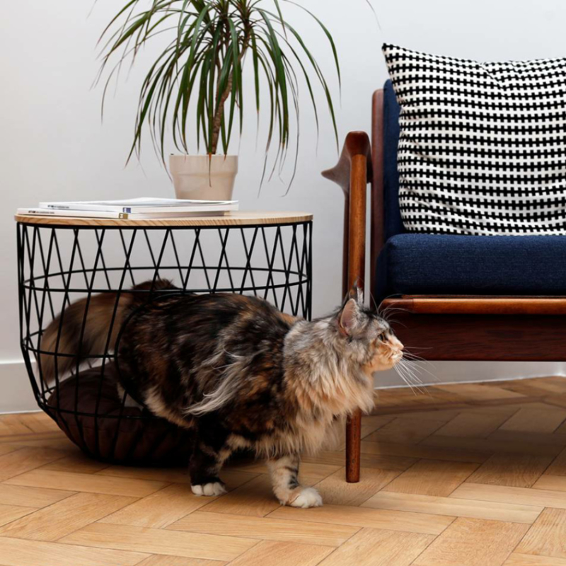51DN Wire cat table zwart kat