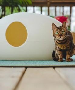 Kat naast kattenbak Poopoopeedo