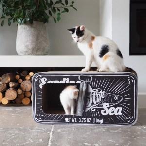 Kat zit op Sardine en kitten zit erin