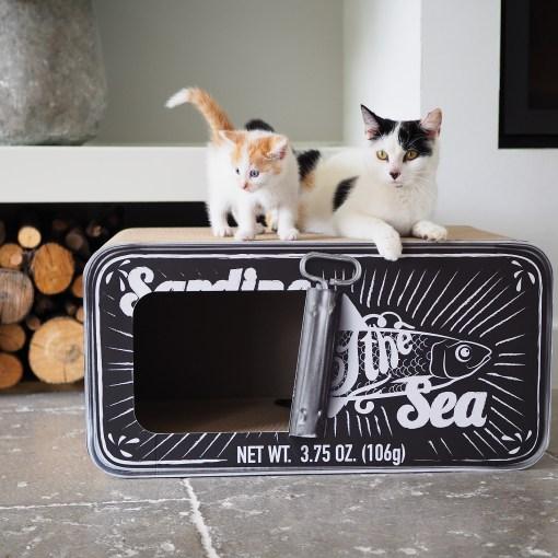 Kitten en kat op Sardine