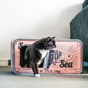 Kat stapt uit Sardine