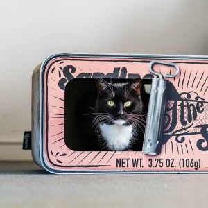 Kat zit in Sardine