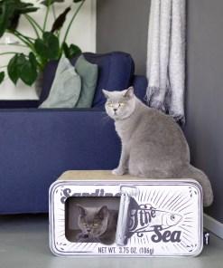 Katten in en rondom krabmeubel District 70 Sardine