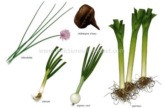 légumes bulbes image