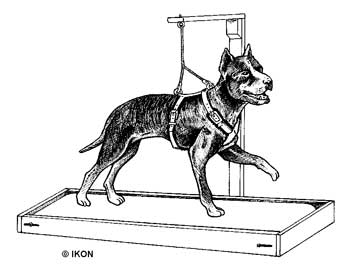 Dog Harnesses, Dog Carting Harnesses, Dog Weight Pulling