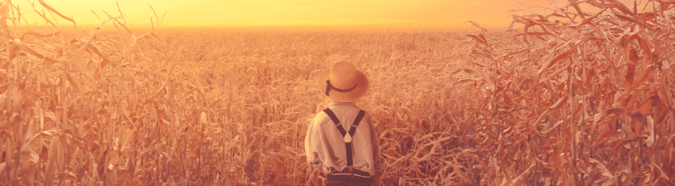 composing_corn_field_ikopix