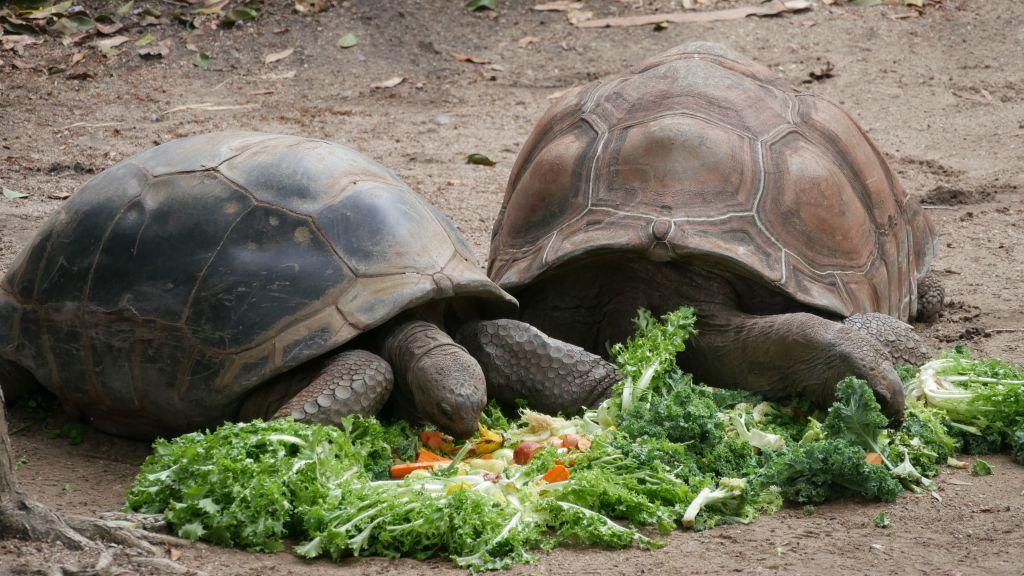 Turtles in Taronga Zoo