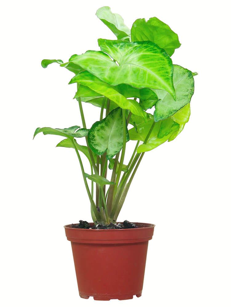 15 Prachtige grote kamerplanten  Ik woon fijn