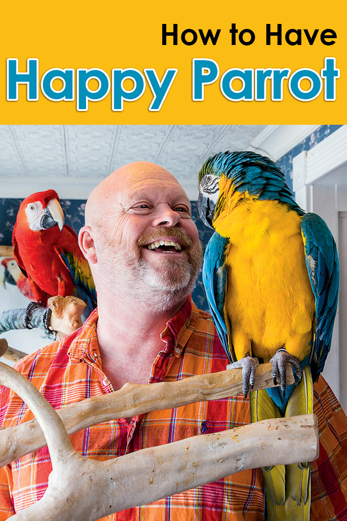 How to Have Happy Parrot