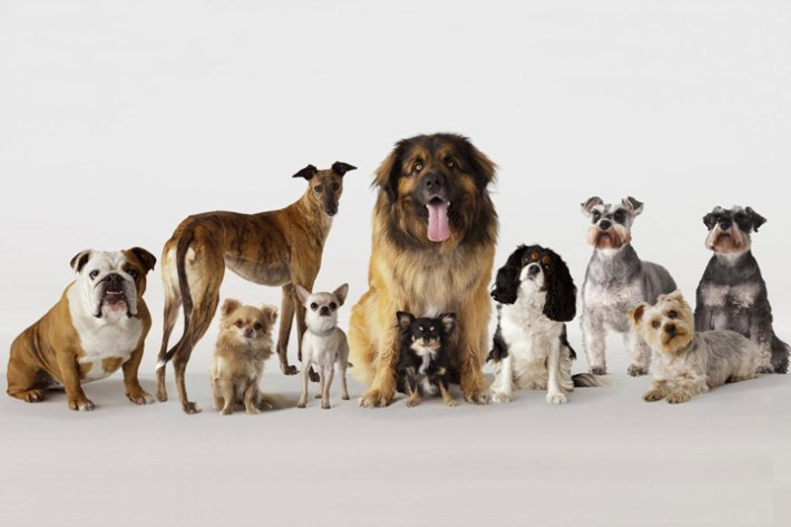 What Dog Breed Is Right For Me?