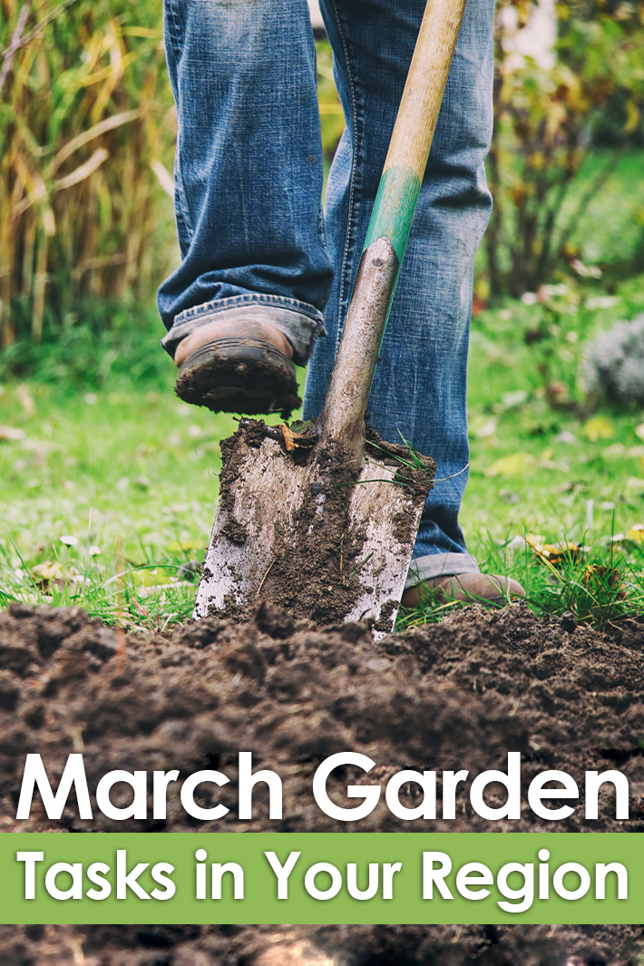 March Gardening Guide: March Garden Tasks in Your Region