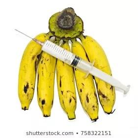 chemical injected banana சூழல் பாதுகாப்பில் விவசாயிகளின் பங்கு-பேடினண்ட் மோசஸ் (விவசாயமாணி இலங்கை)