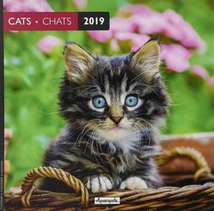 calendario 2019 gatti
