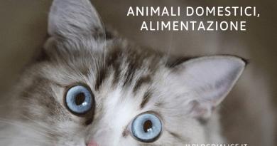 Animali domestici alimentazione, come risolvere i problemi del nostro pet