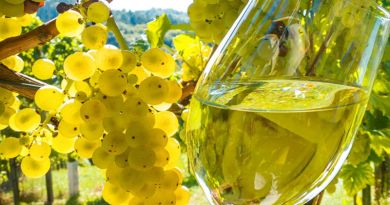 vino-bianco albana