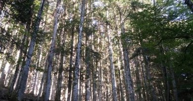 boschi foresta