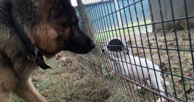 rifugio del canerifugio del cane
