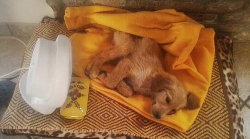 Il cucciolo sopravissuto