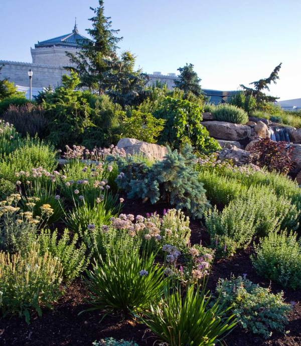 ilca sustainable landscaping
