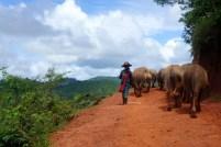 I bufali contribuiscono alle attività economiche delle famiglie: almeno due sono necessari per arare i campi e trasportare il raccolto.