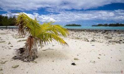 CBP-2015-10-Rarotonga-187