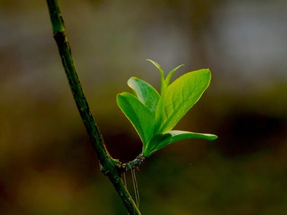 What does Go Green or Environmental Marketing mean in the Firms