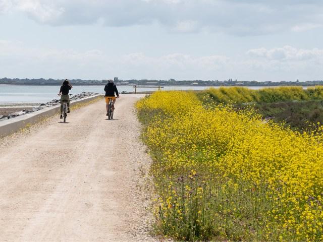 Île de Ré - Vélos