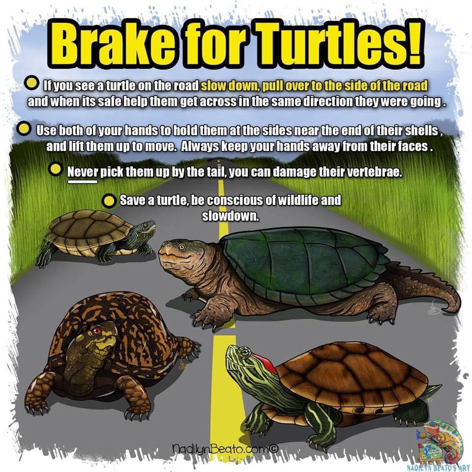 Brake for Turtles