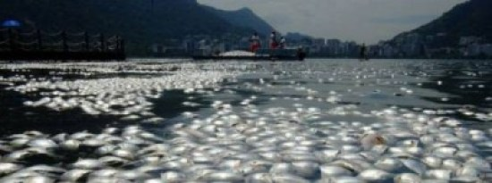 pesci morti brasile lago