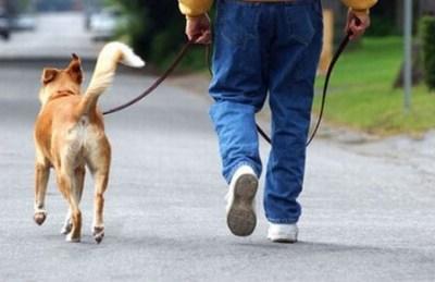 BOLZANO - Arriva la tassa sui cani