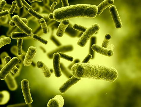 Risultati immagini per listeria monocytogenes