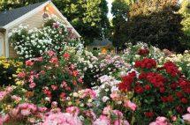 Beautiful Rose Garden Cottage