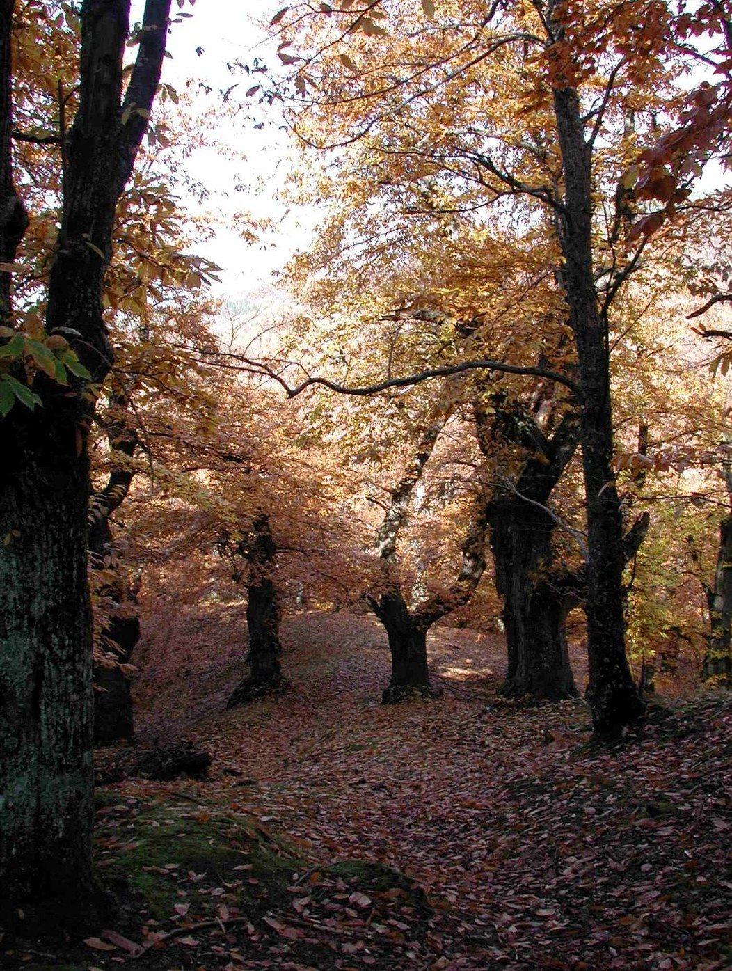 Il Filo del Mugello  Moscheta candidata per il Registro nazionale del paesaggio rurale storico