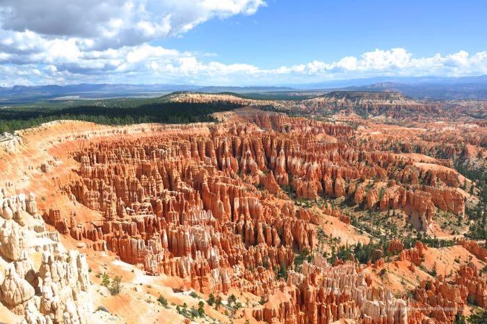 Parco nazionale Bryce Canyon  il fior di cappero