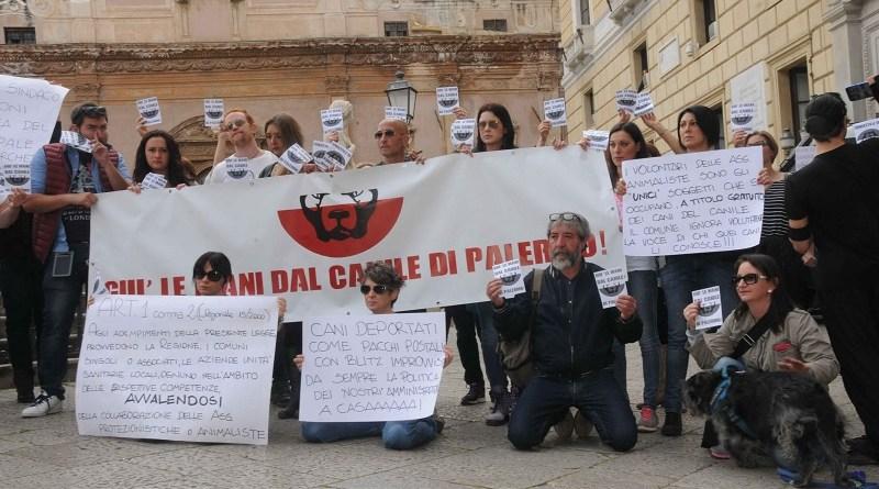 animalisti, protesta Comune di Palermo